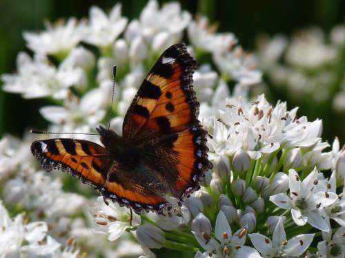 Biologisch met alle ruimte voor insecten als vlinders.