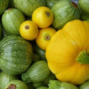 Courgettes en pompoenen van Kwekerij Zonnemaire