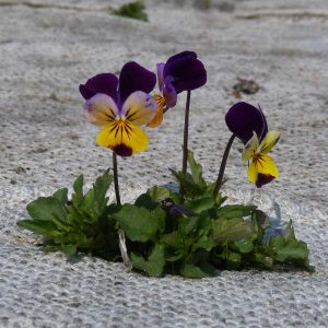Jonge plantjes komen op op de kwekerij